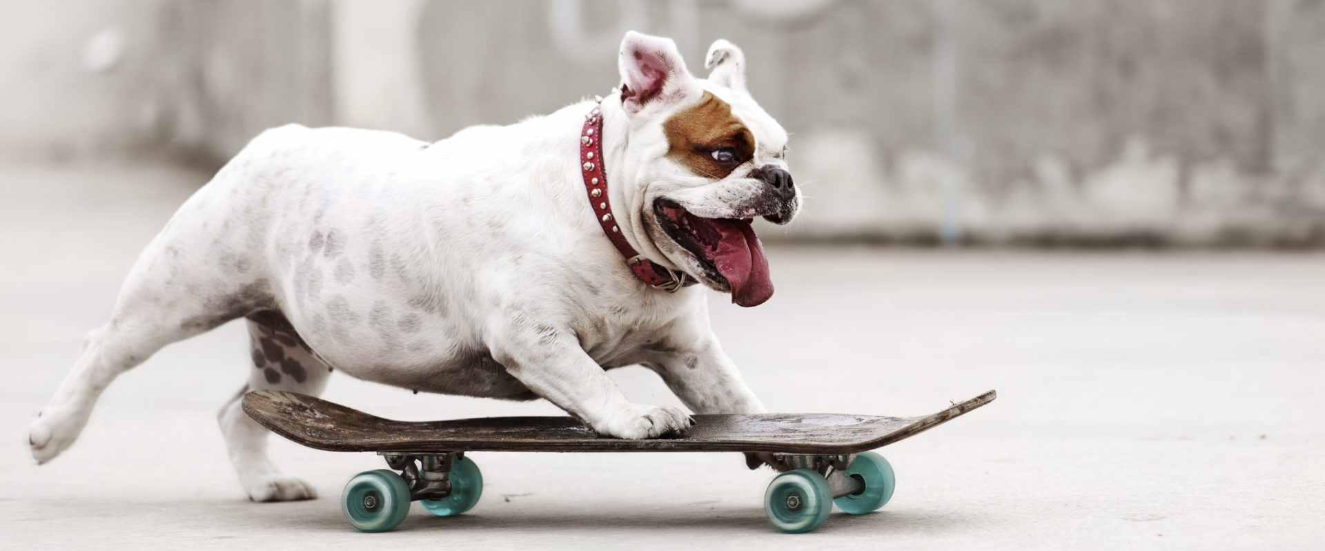 Hunde-Power